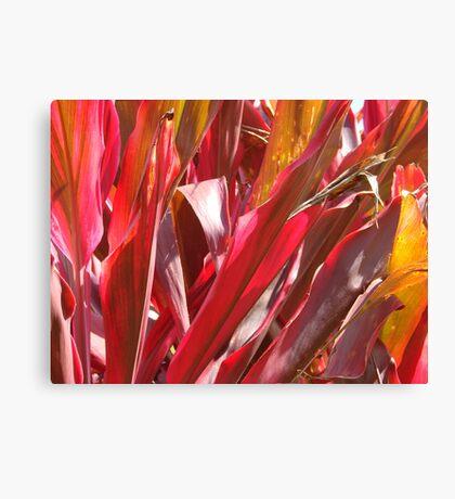 Firey Cordelines-( Macro) Canvas Print
