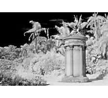 in the gardens of my dreams Photographic Print
