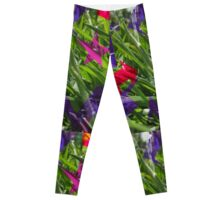 naturefiti Leggings