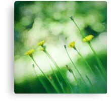Dandelions Through a Lensbaby Canvas Print
