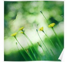 Dandelions Through a Lensbaby Poster