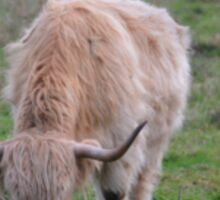 Highland Cow Sticker