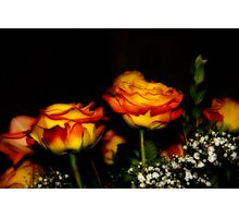 Variegated Roses in Orton Photographic Print