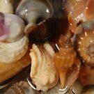 Shells 1 by BecQuist