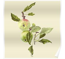 Apples on Bough Poster