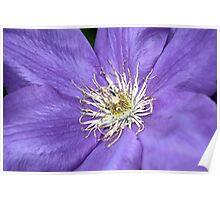 Purple Beauty Poster
