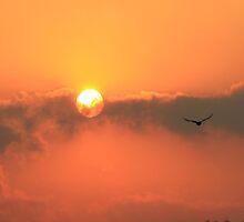 Firey Sunset by Jenelle  Irvine
