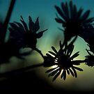 The sad garden series by phantomorchid