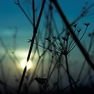The Sad Garden Series V by phantomorchid