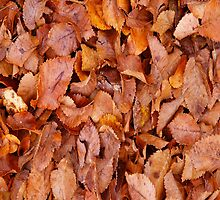 Automne Leaves by Buckwhite