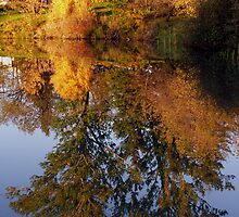 Autumn Reflection by Stan Wojtaszek