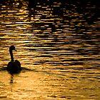 Sunset, Walton Quay by Rachael Talibart
