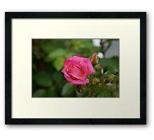 In bloom 1 Framed Print