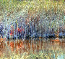 Wetland Grasses by Mark Richards