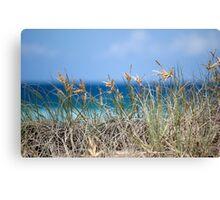 """beach grass""""gold coast""""Australia Canvas Print"""