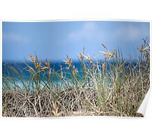 "beach grass""gold coast""Australia Poster"