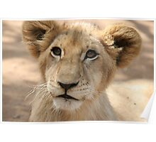 Little Lion Poster