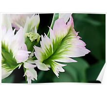 """Green Wave"" Parrot Tulip Poster"