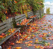 Fallen leaves by zumi