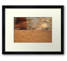Up Close & Personal Framed Print