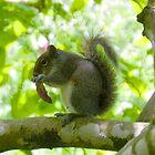A Squirrel eating a Magnolia petal........ by lynn carter