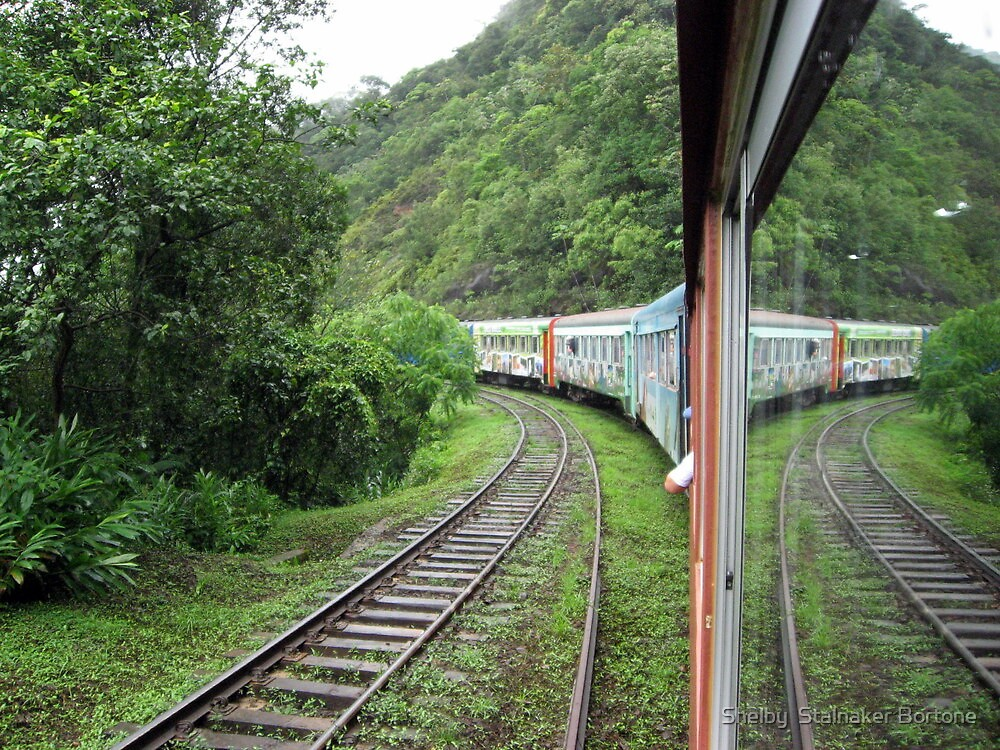 Train in the Rain Forest by Shelby  Stalnaker Bortone