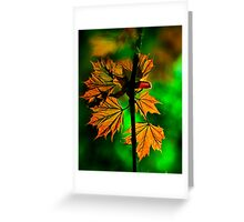 New England Maple Greeting Card