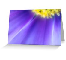 Aster Flower Greeting Card