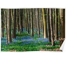 Hallerbos, The Blue Forest Poster