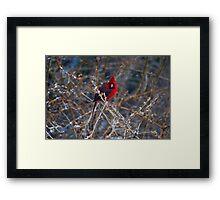 Christmas Bird Framed Print