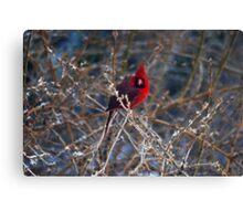 Christmas Bird Canvas Print