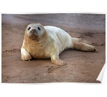 The Donna Nook Grey Seal Colony 2 Poster