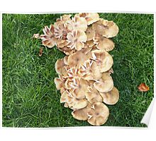 The forest Fungi Bouquets Poster