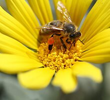 Working Bee by Birds &  Bees