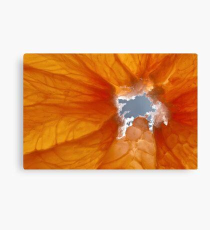 Grapefruit I Canvas Print