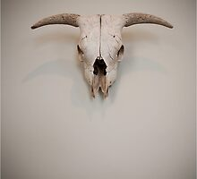 Isolated Steer Skull Head by doorfrontphotos