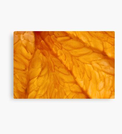 Grapefruit III Canvas Print
