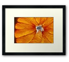 Grapefruit VI Framed Print