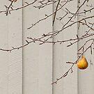 Pear X2 by Twistedwhisker1