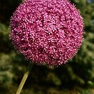 Pink Afro by Ghelly