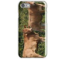 Cows iPhone Case/Skin