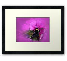 Bee Pink Framed Print
