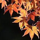 maple by NEmens