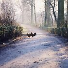 Roosters by DarylE