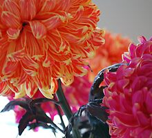 pink and orange pom-poms by chiquitalolita