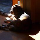 Fletcher Catching A Sun Beam by rharvey