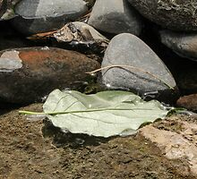 Leaf in the Water by Gary Horner