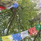 Sunlight, silver birch and prayer flags by LP-D