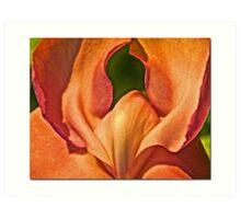 Vine Blossom Art Print