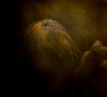 Primate At Thought by RockyWalley